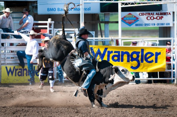 Bull Riding at Innisfail Pro Rodeo